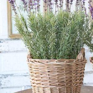 Large Potted Lavender Basket