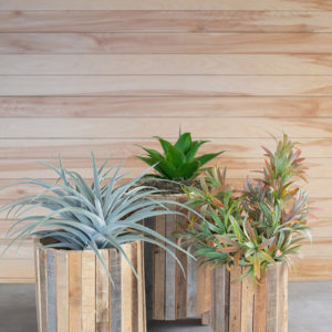 Set Of Three Natural Recycled Wood Round Planters
