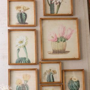 Set Of Nine Cactus Flower Prints Under Glass