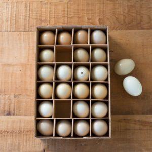 Ameraucana Chicken Eggs Set of 24 Min 6 Sets
