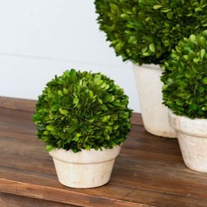 Small Potted Boxwood Ball
