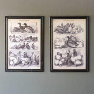 Fowl Species Sepia Prints Min 2