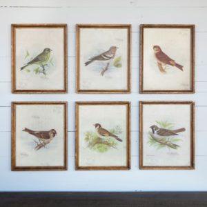 Vintage Bird Prints Assort of 6