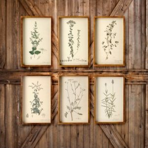 Collected Botanical Prints Set of 6