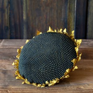 Sunflower Head, Min 6