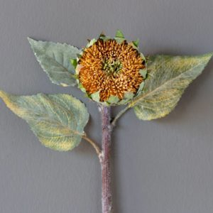 Dried Sunflower Bud Min 12