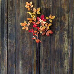 Autumn Virginia Creeper Leaf Spray Min 6