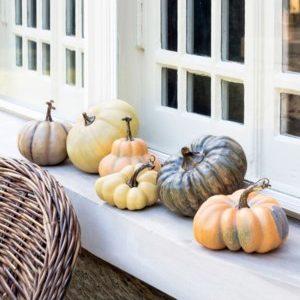 Le Potiron French Pumpkin Collect set/6