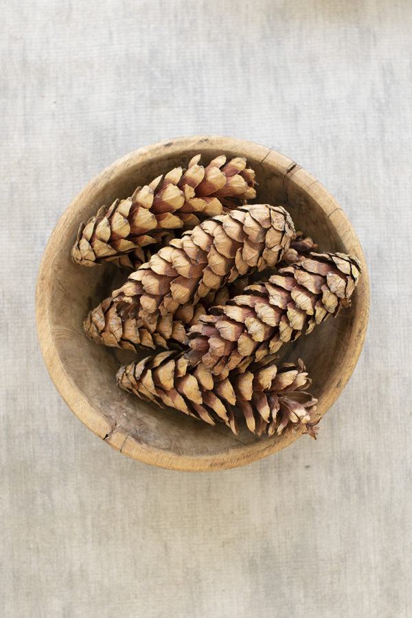 Bag Of 6 Strobus Pine Cones - Natural - (Includes 12 Bags)