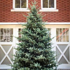 12' Blue Spruce LED