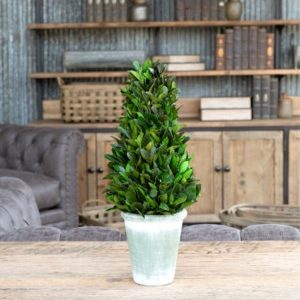 Potted Laurel Cone Topiary # 16