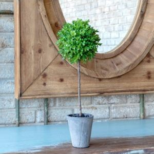Single Ball Boxwood Topiary # 13