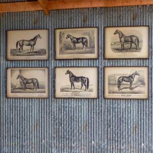 Prized Race Horse Framed Print 6 Asst Styles