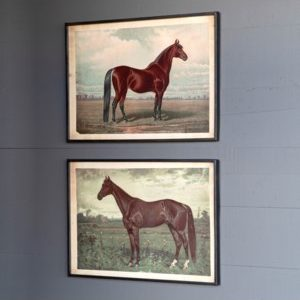 Prized Horse in Pasture Framed Print 2 Asst Styles