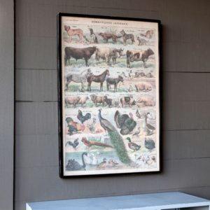 Framed Domestic Animal Canvas Print