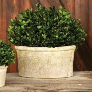 Potted Oval Boxwood Large