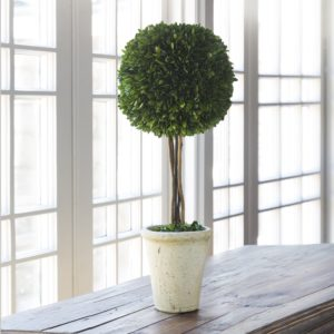 Preserved Boxwood Topiary Ball On Stem