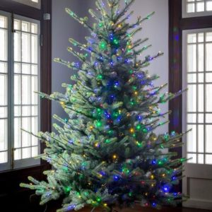 7.5' Blue Spruce LED Clear & Multi Option