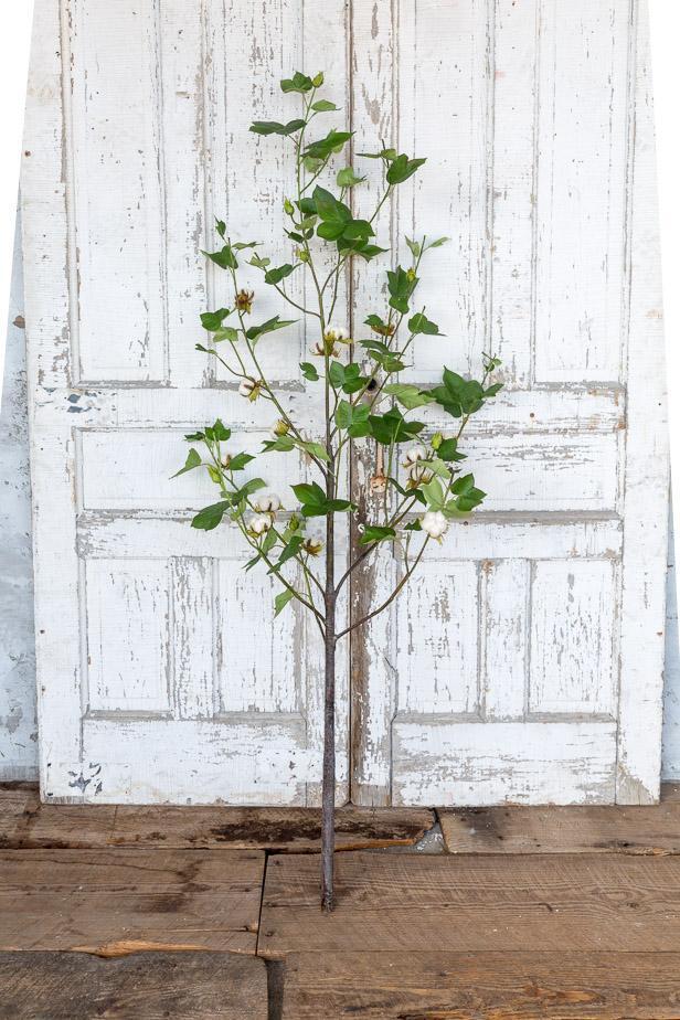 Green Cotton Plant