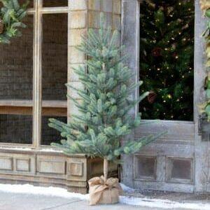 Burlap Wrapped Blue Spruce Seedling with LED Batt. Lights Lg